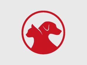 Lost Pet: Bazinga