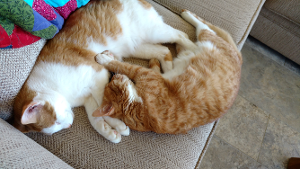 Lost Pet: Peaches and Herbie