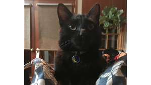 Lost Pet: Theo