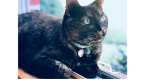 Lost Pet: LACEY