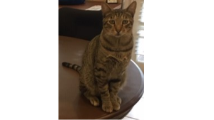 Lost Pet: Tommy