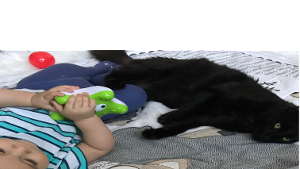 Lost Pet: Black Jack (adoption name Cornor)