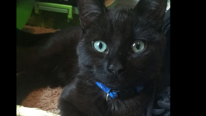 Lost Pet: Lucky