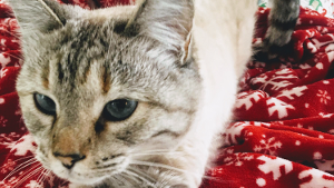 Lost Pet: Willow
