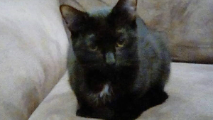 Lost Pet: Manchester