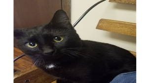 Lost Pet: Asher