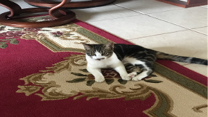 Lost Pet: Nellie
