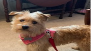 Lost Pet: Lucy