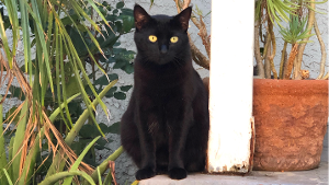 Lost Pet: Midnight
