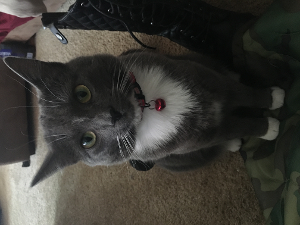 Lost Pet: Kitty Foreman