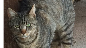 Lost Pet: Fisher