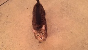 Lost Pet: Lily