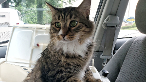 Lost Pet: Raleigh