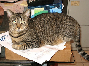 Lost Pet: Tabitha