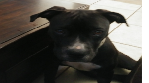 Lost Pet: Rayna