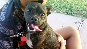 Lost Pet: Dasher