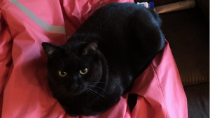 Lost Pet: Blackie