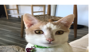 Lost Pet: Jerry