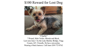 Lost Pet: Charlie Barkley Laird