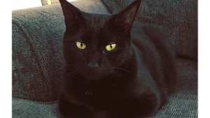 Lost Pet: Salem
