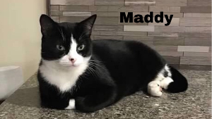 Lost Pet: Maddy