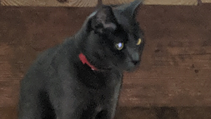 Lost Pet: Kitt- call 386-956-3074