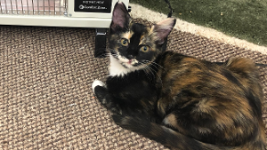 Lost Pet: Snickers