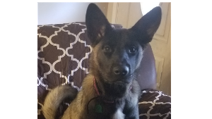 Lost Pet: Maggie