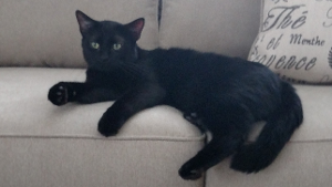 Lost Pet: PANTHER
