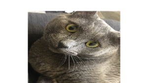 Lost Pet: Stormy