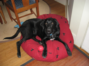 Lost Pet: Tux