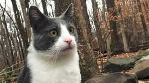 Lost Pet: Marvin