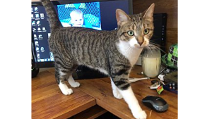Lost Pet: Olive