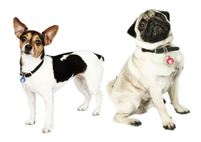 Shop for PetLink ID Tags and Collars