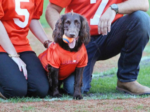 Cute Dog in Football Jersey